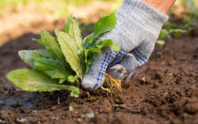 Save Cash by Pulling Weeds